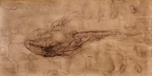 Fumitaka Kudo Living fossils - Premio Bice Bugatti Segantini 2012